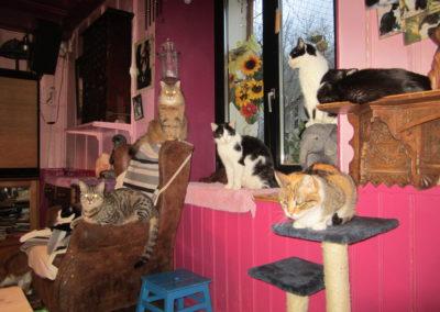 plusieurs chats au salon