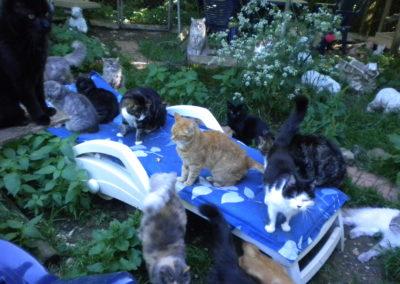Chats dans le parc
