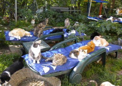 Plusieurs chats dans les parcs