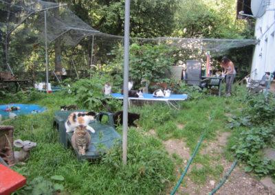 Plusieurs chats dehors